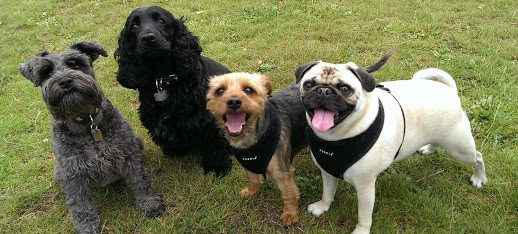 The Doggy Gang at Battersea Park dog daycare Walkers