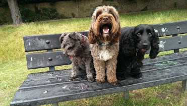 Harrisons Dogs - Dog Walker Clapham Tooting Wandsworth Walkers and Boarding