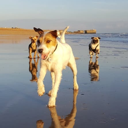 Dog Boarding by the Sea Hastings - Dogs from Clapham and Balham