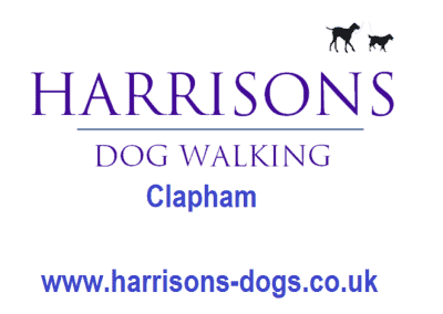 Harrisons Dogs Dogs- Clapham - Dog Walker and Daycare