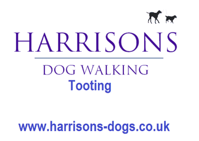 Harrisons Dogs Log- Tooting - Dog Walker and Daycare