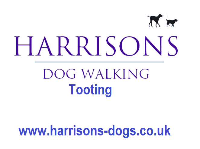 Tooting Dog Walker - SW17 - Logo