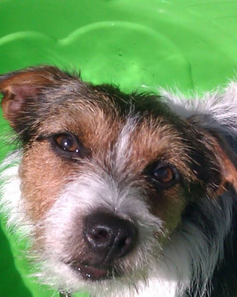 Stan on Dog Day Care - Balham SW12