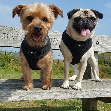 Alf and Charlie - Doggy Day Care - Clapham SW4