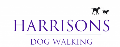 Dog Walker Tooting Balham Clapham Wandsworth