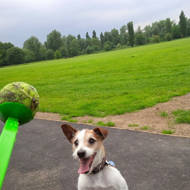Clapham - Dog Walking - Burt and the Ball