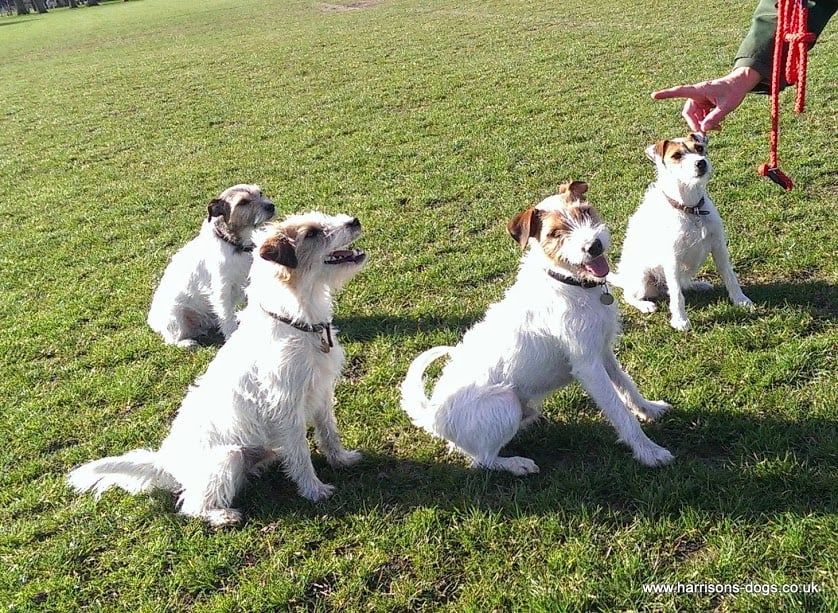 Battersea and Wandsworth Dog Walkers