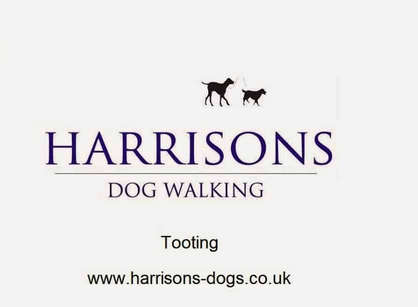 Tooting SW17 Dog Walker - Walkers - Walking